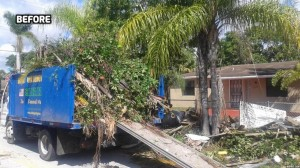 Palm Tree Removal Miami